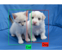 imagealgorithms:classification_ex.png